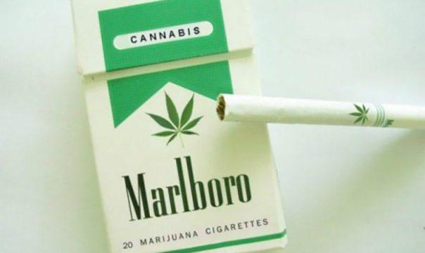 Marlboro-Cannabis-Market-Entry